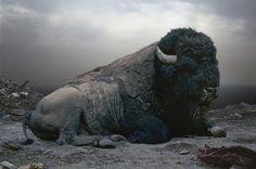 Simen Johan's Majestic Beasts: Until the Kingdom Comes