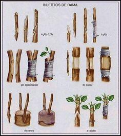 Organic Gardening Tips For Beginners Veg Garden, Bonsai Garden, Fruit Garden, Garden Trees, Edible Garden, Garden Plants, Grafting Fruit Trees, Grafting Plants, Organic Gardening