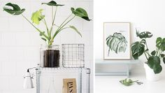 "Interior ""it"" greens — Coterie"