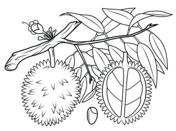 Blueberry Bush coloring page from Blueberry category. Select from 26278 printable crafts of cartoons, nature, animals, Bible and many more.