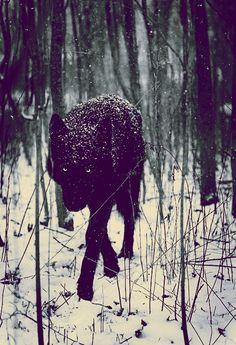 Le loup surnois