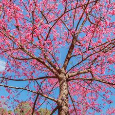 Fafard trees Archives - Fafard Spring Flowers, White Flowers, Gardening Websites, Summer Trees, Organic Compost, Tree Care, Top Soil, Cherry Tree, Small Trees