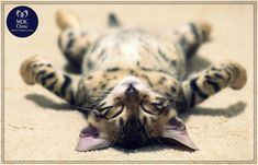Aki nem akarja a szabadságát kivenni az orvosi vizsgálatok elvégzésére, akkor jöjjön el hozzánk a szombati rendelésünkre. Cats, Animals, Gatos, Animais, Animales, Animaux, Animal, Kitty, Serval Cats
