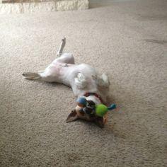 My crazy dog..gotta love him tho! :)