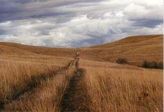 Konza Prairie public hiking trail