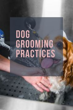 Dog bathing day may not be the most exciting thing to look forward to. Before you start, it helps to know all the dog grooming tips that make bath time a fun moment for you and the animal. Natural Dog Shampoo, Dog Shaking, Dog Grooming Tips, Dog Health Tips, Dog Cleaning, Large Dog Breeds, Dog Care Tips, Dog Training Tips, Positive Attitude