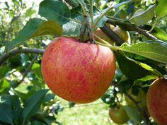 Il développe une appli pour vous aider à connaître le taux de pesticides dans vos aliments