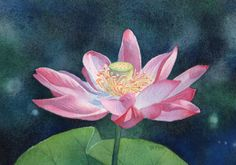 OPEN LOTUS watercolor floral painting by Barbara Fox