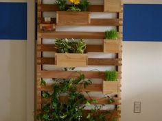 "Student Designs Rainwater Harvesting Vertical Garden"" — Useful indoors too, and you could do this with recycled pallets."