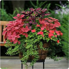Coleus are so pretty. The Lime color makes the othe plants show up beautifully. I always have coleus in my flower beds or in pots. Outdoor Flowers, Outdoor Plants, Outdoor Gardens, Patio Plants, Front Porch Plants, Front Porches, Outdoor Decor, Pot Jardin, Garden Cottage