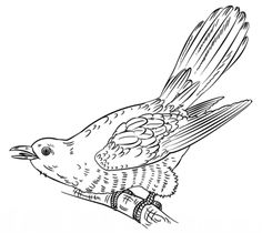 Song Sparrow Coloring page Burgess