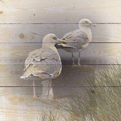 Bild Möwen Shabby, Holzbretter, ca. L70xH70 cm Jetzt bestellen unter: https://moebel.ladendirekt.de/dekoration/bilder-und-rahmen/bilder/?uid=93867c57-8269-5a3b-9efe-5caa9f63fb0c&utm_source=pinterest&utm_medium=pin&utm_campaign=boards #bilder #rahmen #dekoration