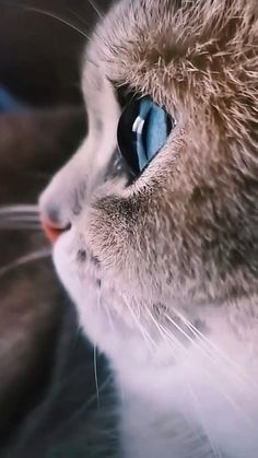 Cute Wild Animals, Baby Animals Super Cute, Cute Baby Dogs, Cute Little Animals, Baby Cats, Funny Cute Cats, Cute Funny Animals, Cool Cats, Pretty Cats