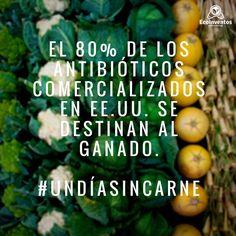 El 80% de los antibióticos comercializados en EEUU se destinan al ganado. #undiasincarne