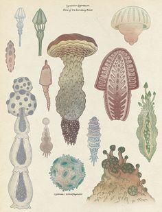 Mushroom~ Katie Scott