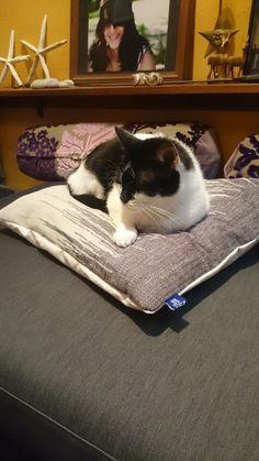 Cushions, Pillows, Rugs, Table, Furniture, Home Decor, Toss Pillows, Throw Pillows, Farmhouse Rugs