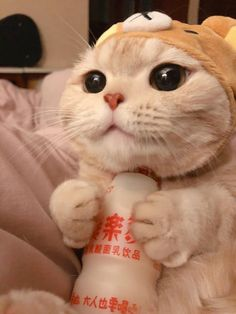 Cute Baby Cats, Cute Little Animals, Cute Cats And Kittens, Cute Funny Animals, I Love Cats, Kittens Cutest, Cute Dogs, Cute Cat Memes, Cute Cat Wallpaper