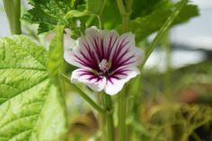 Ads, Plants, Flora, Plant, Planting