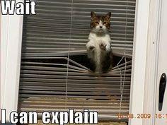 cat humor   cat funny - Animal Humor Photo (20008157) - Fanpop fanclubs