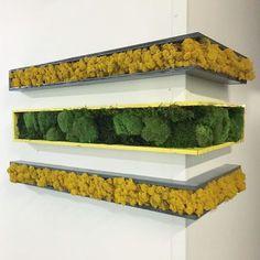 Corners #flowerboxus #creation #unique #mosswall #mossart #moss #verticalgarden #green #nature #interiordesign #design #art #wallart #walldecor #wallcovering #livingwall #wallgarden