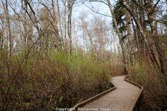 Hylebos Wetland boardwalk in Federal Way