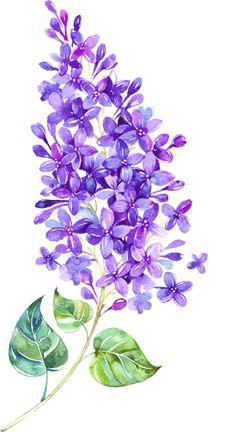 Lilac decoupage