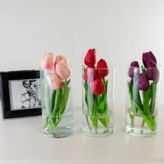Real Touch Yellow-Orange Red Purple Tulips Arrangement Set – Famous Last Words Purple Vase, Purple Tulips, Tulips Flowers, Tulpen Arrangements, Flower Arrangements Simple, Wedding Arrangements, Tulip Wedding, Tulip Bouquet, Tulips Garden