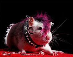 Punk hamster