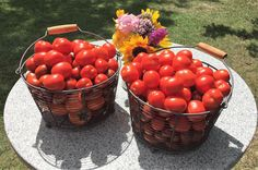 Große Gartenernte - selbstgemachte Tomatensauce Spaghetti Bolognese, Polenta, Zucchini, Vegan, Vegetables, Food, Lasagna, Harvest, Eat Lunch