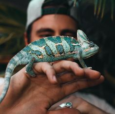 New post on tropicallyparadise Les Reptiles, Cute Reptiles, Reptiles And Amphibians, Like Animals, Cute Baby Animals, Animals And Pets, Funny Animals, Animals Beautiful, Beautiful Creatures