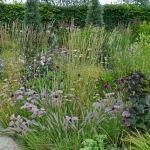 Návod na únorový řez révy vinné: test odhalí, o kolik oček zkrátit - Užitková zahrada Rv, Pergola, Plants, Motorhome, Camper Tops, Pergolas, Planets