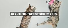 22 Awesome Websites with Stunning Stock Images Just for You! Free Images For Websites, Stock Photo Websites, Amazing Websites, Free To Use Images, Cool Websites, Free Stock Photos, Royalty Free Photos, Site Photo, Images Gif