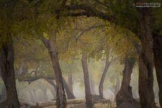 Fairytale Forest – Mana Pools, Zimbabwe.  Photo by Alison Buttigieg