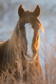 Chestnut horse in the morning