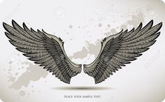 11747237-Wings-hand-drawing-Vector-illustration--Stock-Vector-falcon-hawk-griffon.jpg (1300×806)