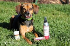 Did you know you can actually save money by SHARING with your dog? Find out what types of products both you and your pets can use!