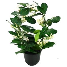 Indoor Plants, Madagascar, Cool Stuff, Plants, Inside Plants