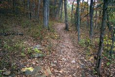 Thousand Hills State Park, Missouri (October 2002).  A typical hiking path at the park.
