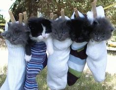 As per a specific request I give you Kittens In Socks
