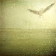 Dreams of flying