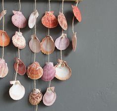 ...what do YOU do with shells after collecting them?