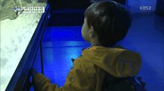 Daehan being fascinated with fishes | The Return of Superman