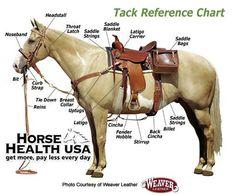 western saddle diagram western saddle parts diagram horse rh pinterest com Quotes Western Saddle Western Saddle Replacement Parts