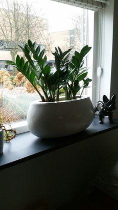 Een ander plantje op de andere vensterbank