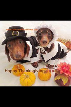 Happy Thanksgiving! ~via I Love Dachshunds