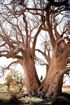 San Camp Botswana, Photographed by David Crookes, Featured in House and Leisure. www.davidcrookes.com