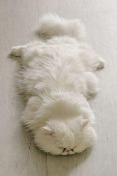 Catskin rug