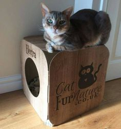This gorgeous little cat is Electra  isn't she beautiful?  #cat #catsofinstagram #cats_of_instagram #catfurnature #catfurniture #catsinboxes #cattoy #INSTACAT_MEOWS #cutecat #PurrMachine #catsinboxes #catbox #Excellent_Cats #BestMeow #dailykittymail #thecatniptimes #catcube #catpod #ArchNemesis #FlyingArchNemesis #myindoorpaws #ififitsisits #cutecatcrew #catchalet #catnip #themeowdaily #kitty #catpyramid #miuandmaosfurriends