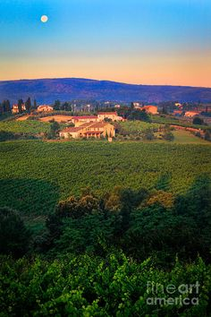 Sunrise at San Gimignano Vineyards. Wine is grown almost everywhere on de hills surrounding de Tuscan town of San Gimignano_ Italy