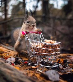 Wildlife Finland: Cute Animal Portraits by Ossi Saarinen Cute Funny Animals, Cute Baby Animals, Animals And Pets, Wild Animals, Squirrel Pictures, Funny Animal Pictures, Funny Pics, Cute Squirrel, Squirrels